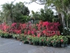 bougainvillea-and-crown-of-thorn-display-for-full-sun