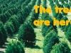 Christmas_tree_farm_IA11