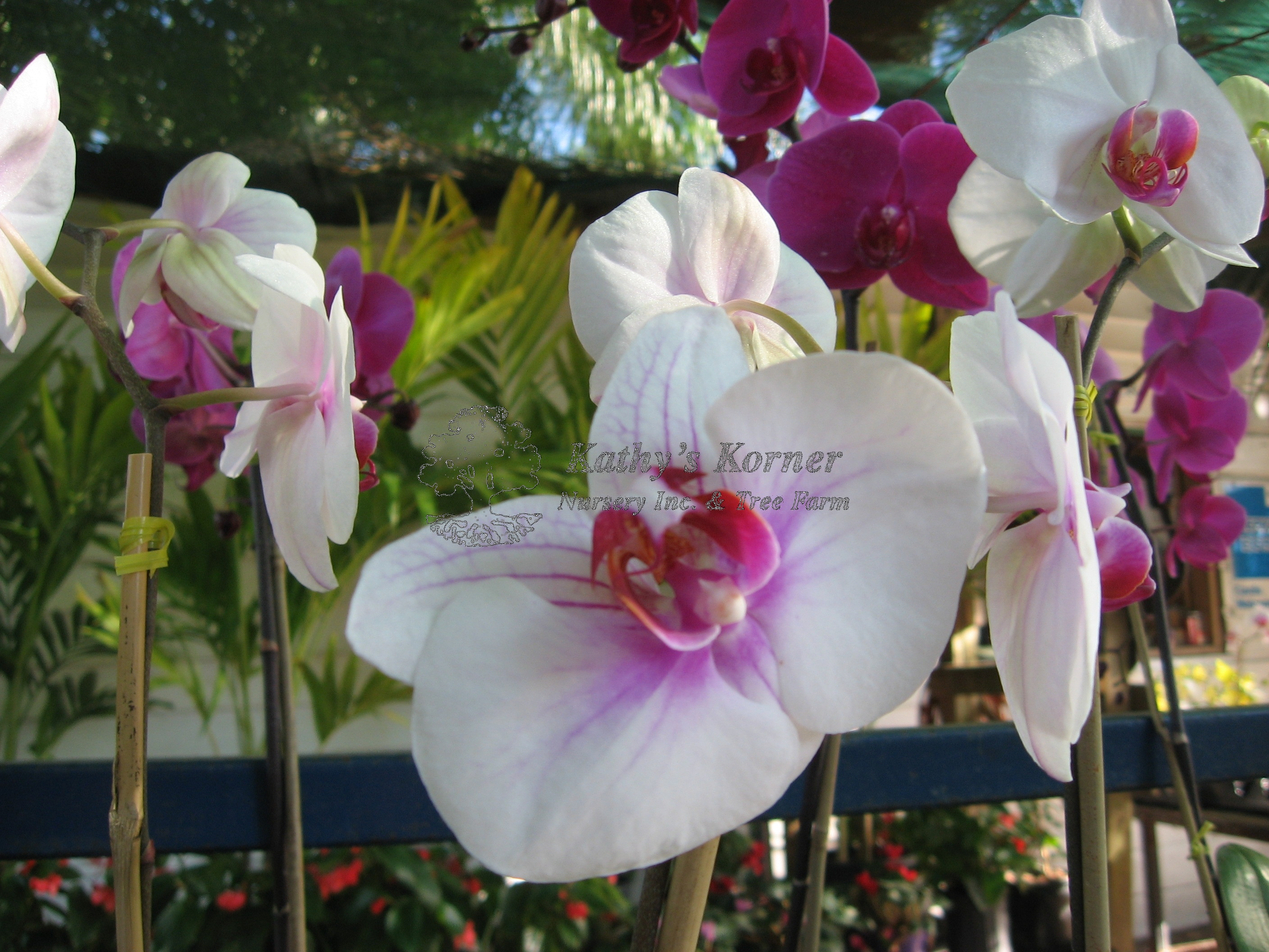 Orchid St. Petersburg - this is not a flower