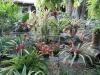 misc-bromeliads
